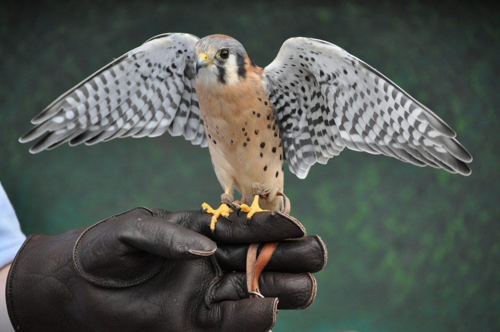 bird-854643