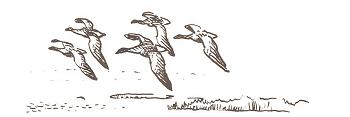 Logo des Goose bulletin